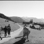 The Alpine settlement of Falein, where the film Heidi was filmed in 1956. Locals round up calves that have been luxuriating in the fresh grasses and local hay all summer. Photo by Ricabeth Steiger.